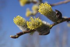 весна ветви Стоковое Фото