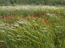 весна ветерка Стоковые Фотографии RF