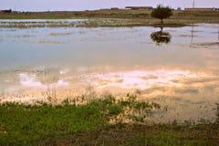 Весна 2013 Витебска Беларуси реки Dvina Стоковые Изображения RF