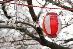 весна 2019 вишневых деревьев стоковая фотография