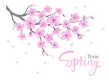 Весна вишневых цветов цветет изолированная ветвь бесплатная иллюстрация