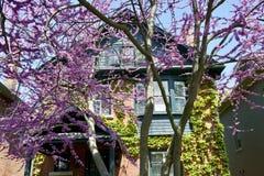 Весна врем-Торонто Стоковые Фотографии RF
