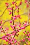 Весна в апреле в университете tsinghua Стоковые Фото
