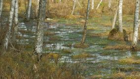 Весна в болоте видеоматериал
