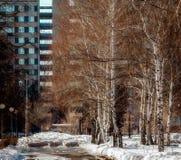 Весна в большом городе Стоковые Фото