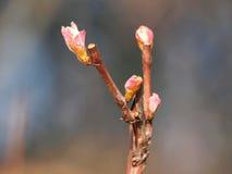Весна в винограднике Стоковое Фото