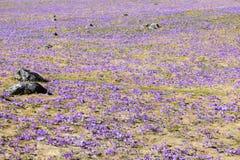 Весна в горах Tatra стоковые изображения rf