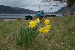Весна в гористых местностях Стоковая Фотография