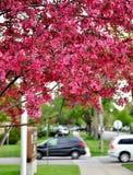 Весна в городе Стоковые Изображения RF