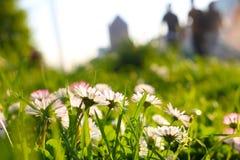 Весна в городе Стоковые Изображения