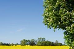 Весна в Европе стоковое фото rf