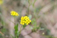 Весна в лесе Стоковое Фото