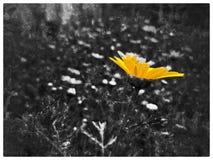 Весна в Израиле Noir Стоковые Изображения RF