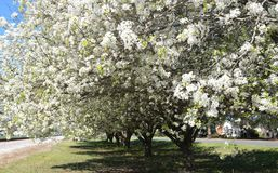Весна в Каролине стоковое фото