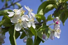 Весна в конце концов приехала Стоковое Фото