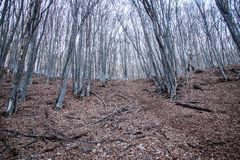 Весна в крымских горах стоковые изображения rf