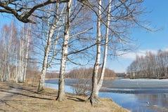 Весна в лесе Стоковые Изображения