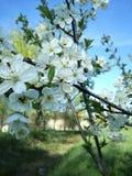 Весна в моем городке Стоковые Фото