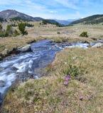 Весна в долине Madriu-Perafita-Claror стоковое фото