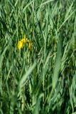 Весна в парке Стоковые Изображения
