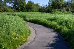 Весна в парке Стоковые Фото