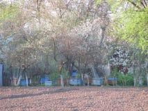 Весна в пасеке Стоковое фото RF