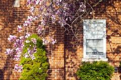Весна в пригородах стоковая фотография rf