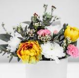 весна в реальном маштабе времени цветет желтые тюльпаны на белой предпосылке стоковые изображения rf