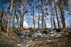 Весна в русском лесе Стоковое Изображение