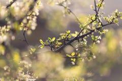Весна в саде Стоковые Изображения RF