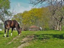 Весна в селе Стоковые Фотографии RF
