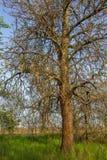 Весна в степи Стоковое Фото