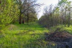Весна в степи Стоковые Фото