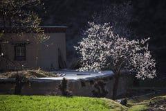Весна в тибетском плато Стоковое Изображение RF
