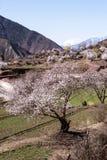 Весна в тибетском плато Стоковая Фотография