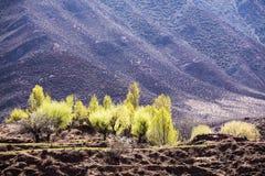 Весна в тибетском плато Стоковые Изображения RF