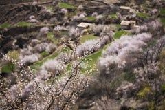 Весна в тибетском плато Стоковые Фотографии RF