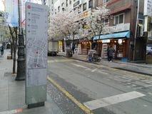 Весна в улице в Южной Корее Сеула Стоковое Изображение RF