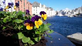 Весна в фьорде Стоковые Изображения