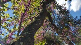 Весна в Флоренсе Стоковое Фото