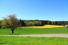 Весна в Швейцарии Стоковые Фотографии RF