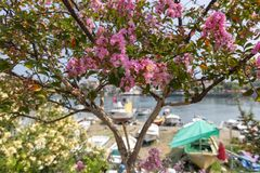Весна в Amasra и красочных новых зацветая цветках стоковая фотография rf