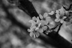 Весна в b & w Стоковое Изображение RF