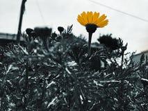 Весна в IsraelÑŽ Noir Стоковое фото RF