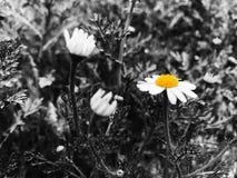 Весна в IsraelÑŽ Noir Стоковые Фотографии RF