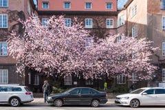 Весна в Norrköping, Швеции стоковое фото rf