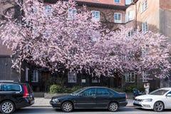 Весна в Norrköping, Швеции стоковые фотографии rf