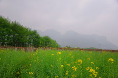 Весна в Pingjiang Стоковое Изображение