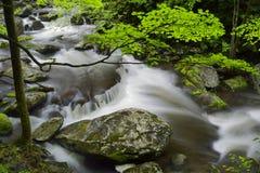 Весна в Tremont на большом национальном парке закоптелых гор, TN США Стоковое Изображение RF