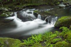 Весна в Tremont на большом национальном парке закоптелых гор, TN США Стоковое Изображение